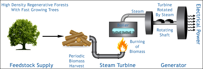 How Does Biomass Combustion Work ~ Energy plantation projects india limited